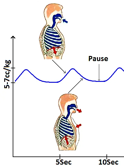 cycle de la respiration